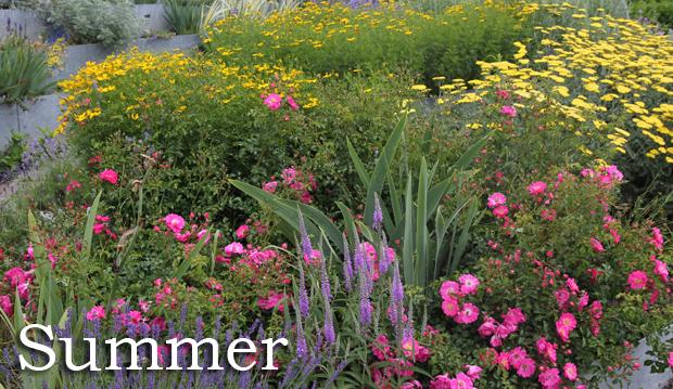 000-3-Title-Summer