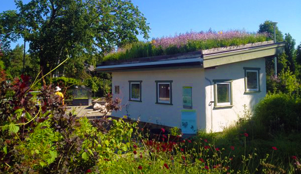 strawbale shed green roof