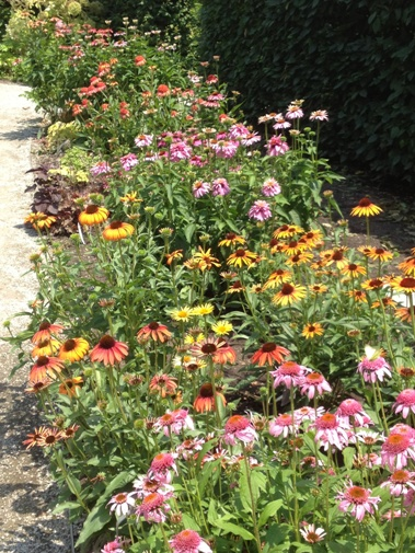 Echinacea: The Whole Shootin' Kaboodle in the Show Garden