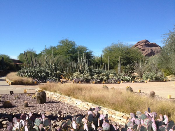 Entry Garden at the Desert Botanical Garden