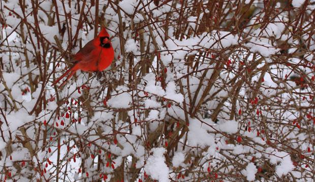 Cardinal Tours Day Trips