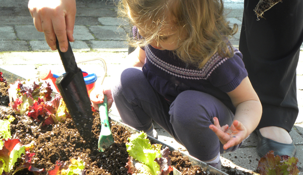 tbg kid digging in raised planter