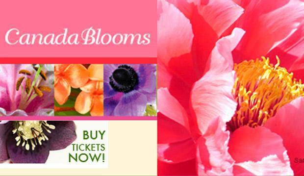 canda blooms