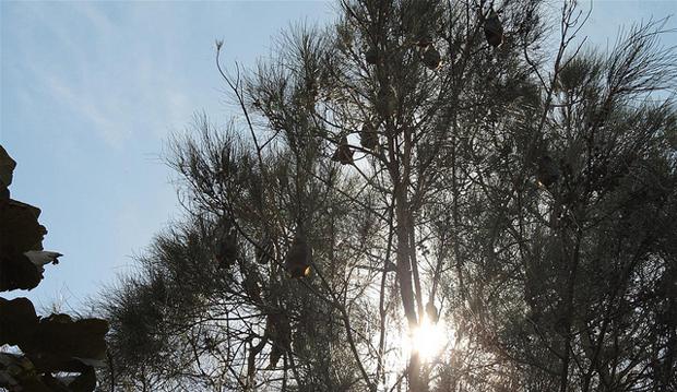 bats-flickr-philotes