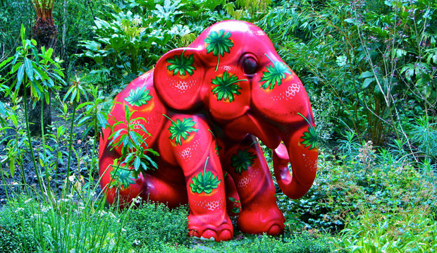 red elephant