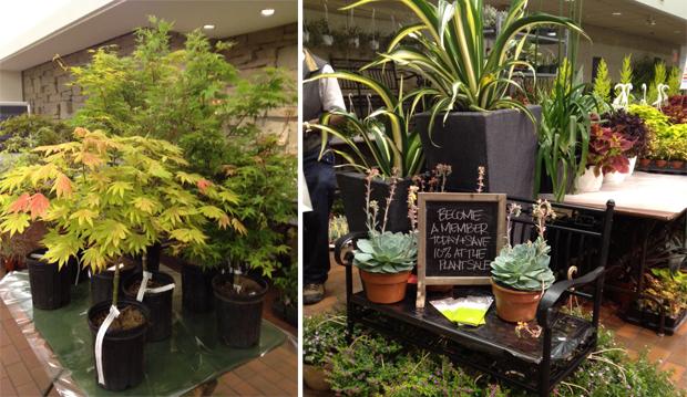 plant sale 2013 web