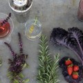 edible drinakable garden 2 Paul Zammit web