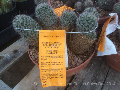 Collecting Conservation AZ Cactus Sales