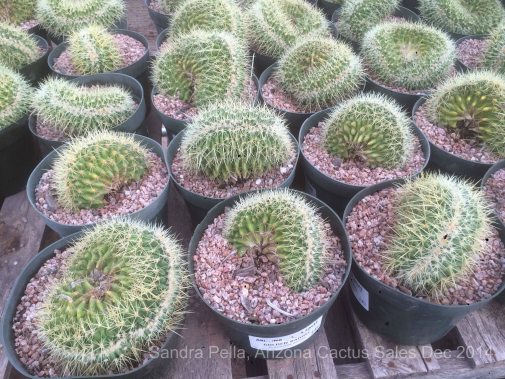 What 39 s in bloom work days in the desert part 1 toronto Cactus pots for sale