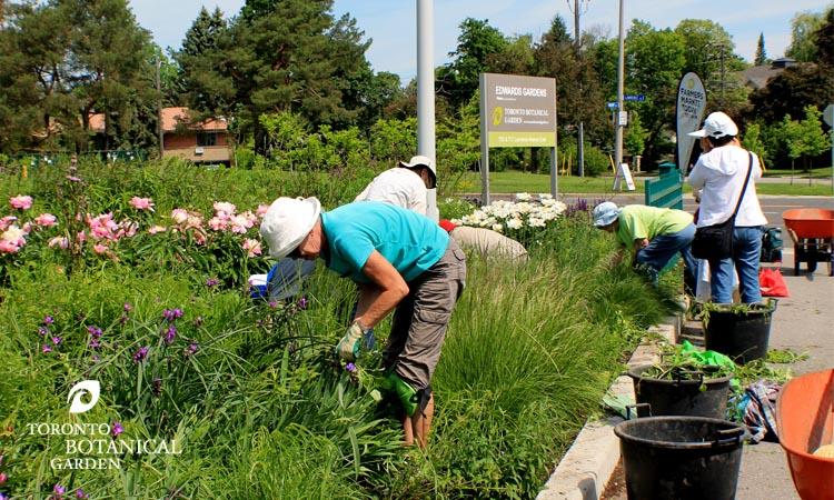 garden_volunteers