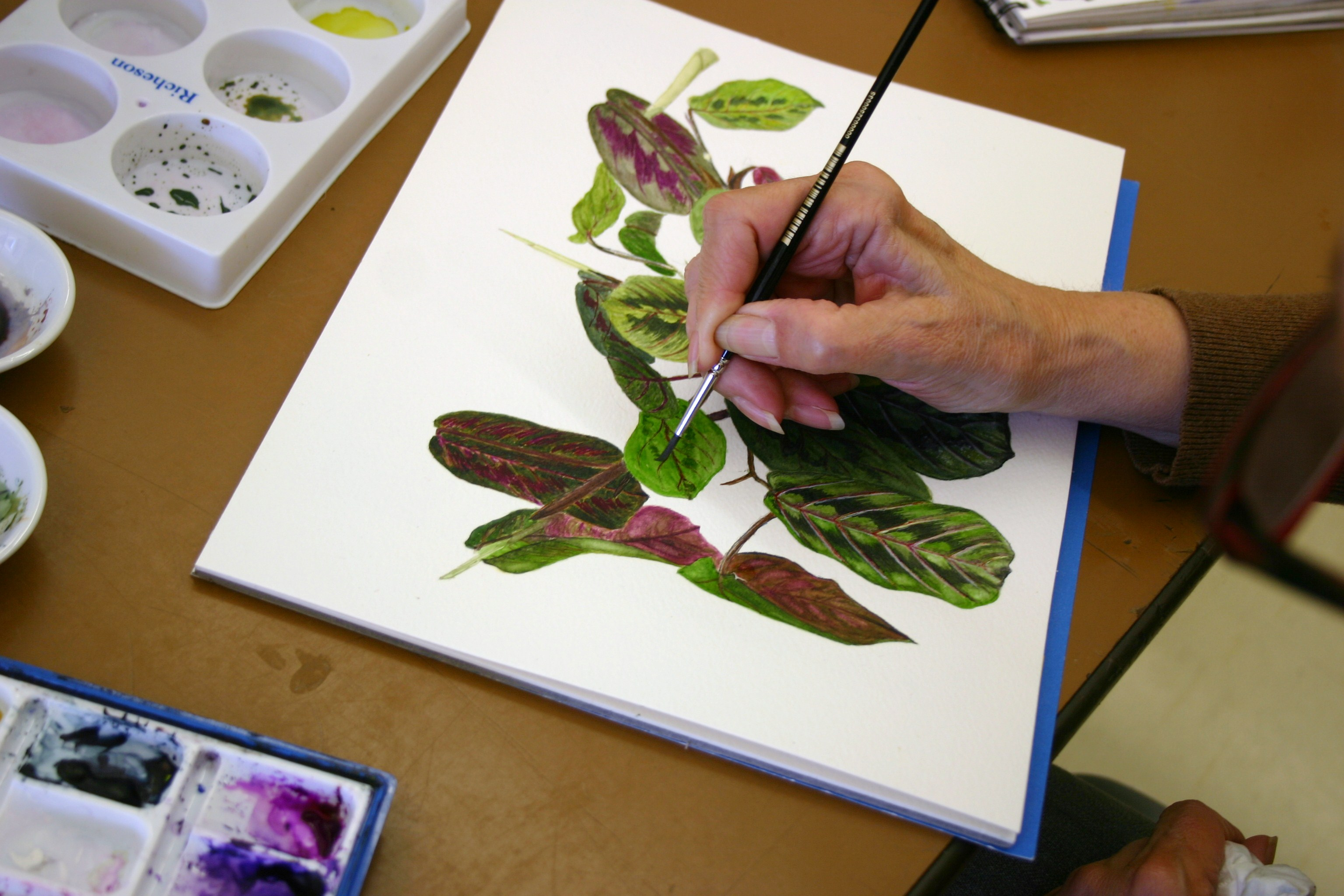 Botanical Art Summer Session