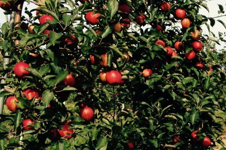 Fruit Tree Secrets