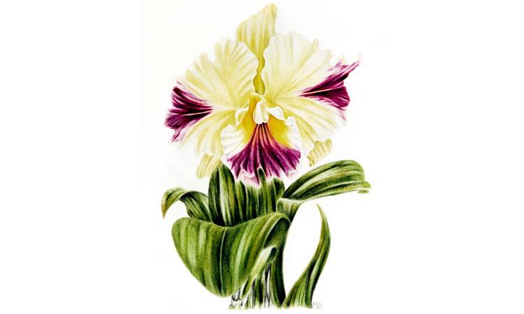 Brilliant Floral Portraits with Coloured Pencils