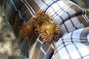Burs stuck to a flannel shirt
