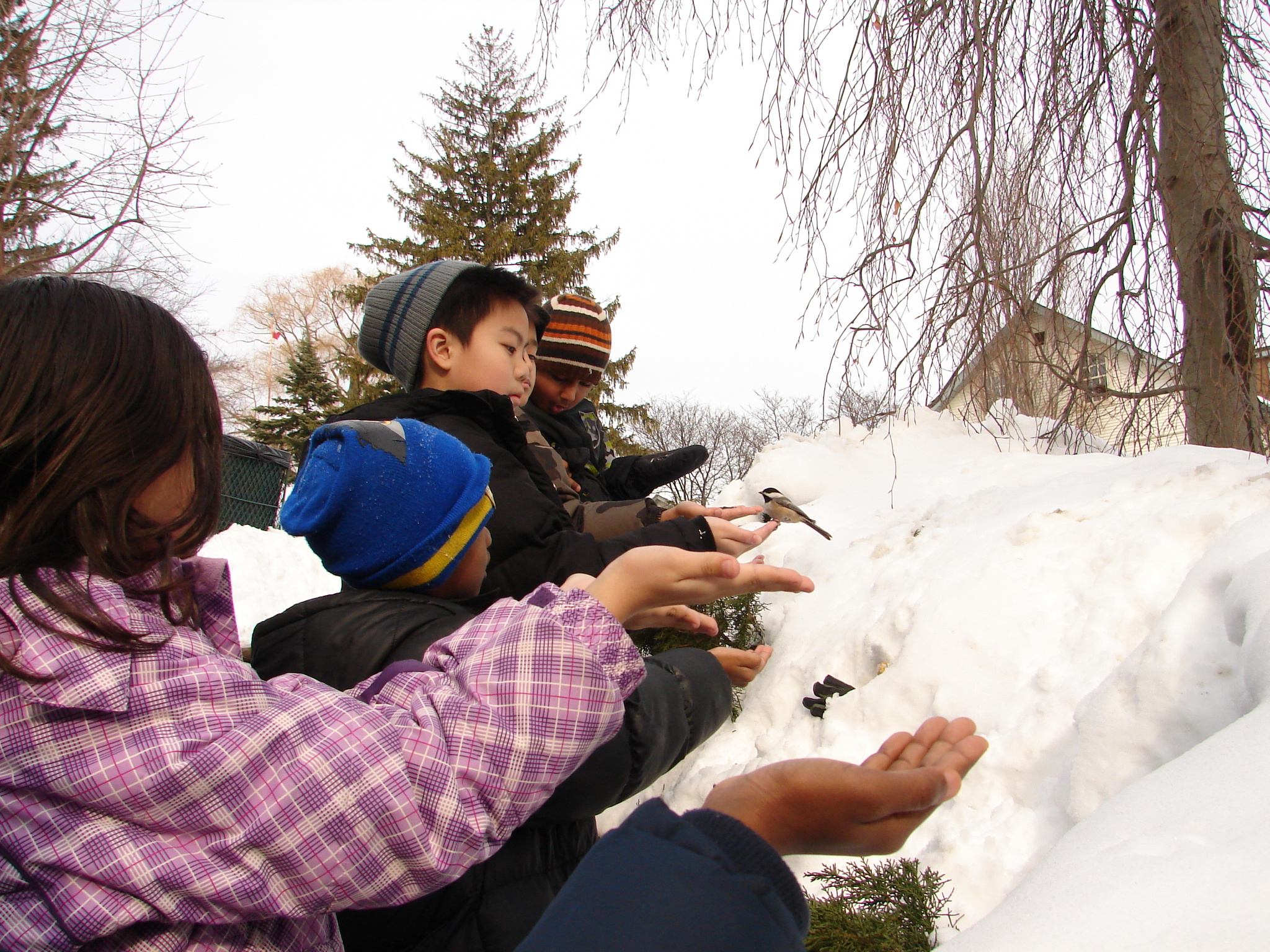 Winter Wander (ages 5 and up)
