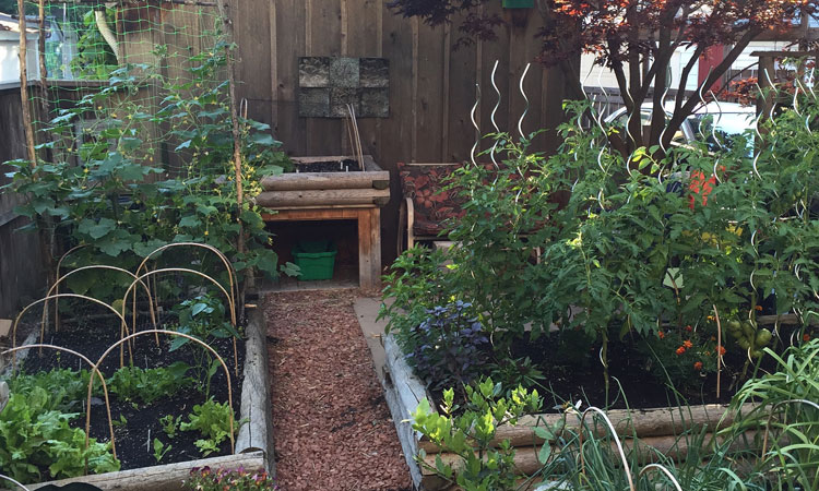 Backyard Urban Farming for Beginners