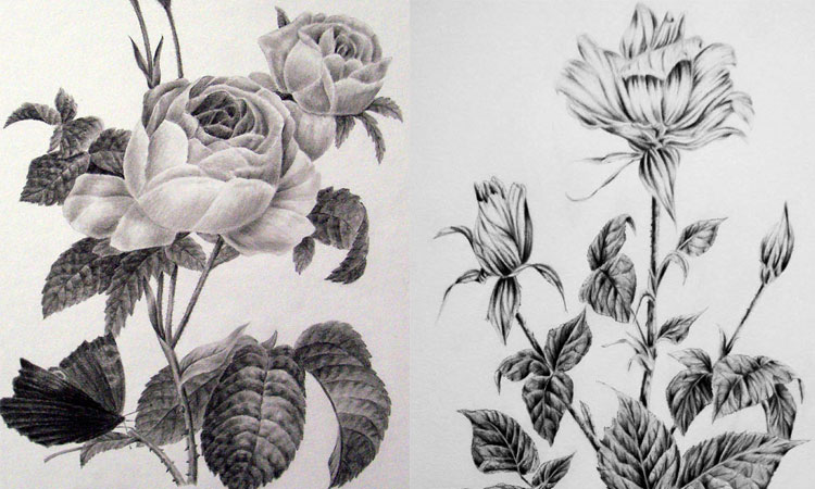 Drawing Plants