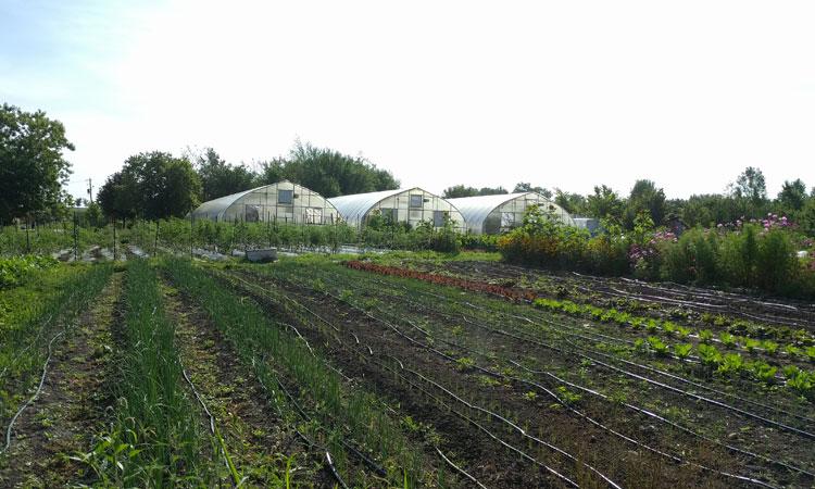 Fresh City Farms Tour