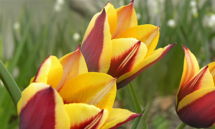 Plant Beautiful Bulbs