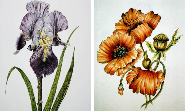 Botanical Drawing with Pen, Ink & Watercolour