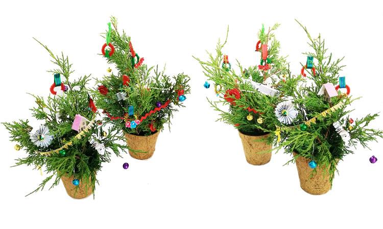 Mini Fresh Christmas Tree Workshop
