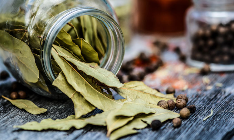 Herbs for Winter Wellness
