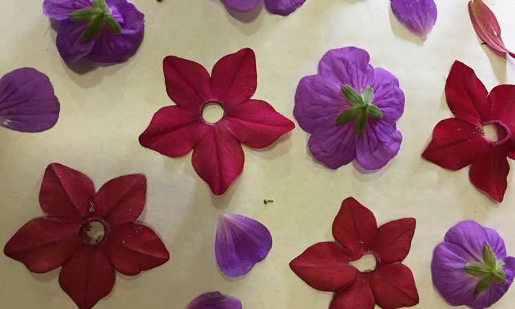 Pressed Flowers as a Horticultural Therapy Tool