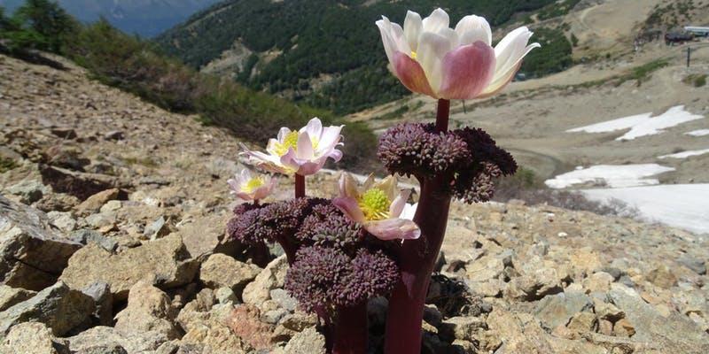 Plants of Patagonia