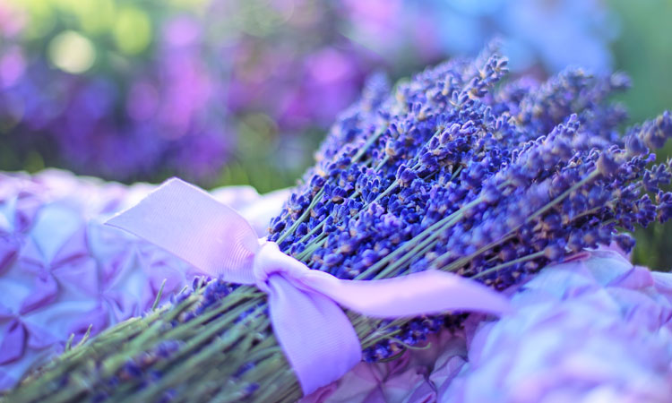 Better Sleep with Lavender