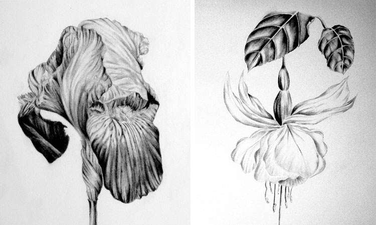 Fundamentals of Botanical Drawing