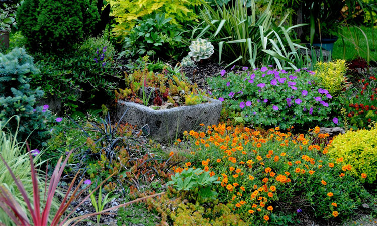 Enhance Your Garden's Beauty