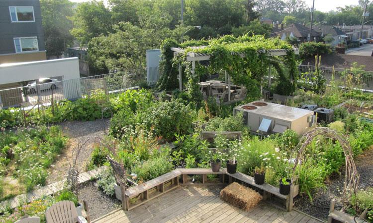 AccessPoint Rooftop Garden Tour