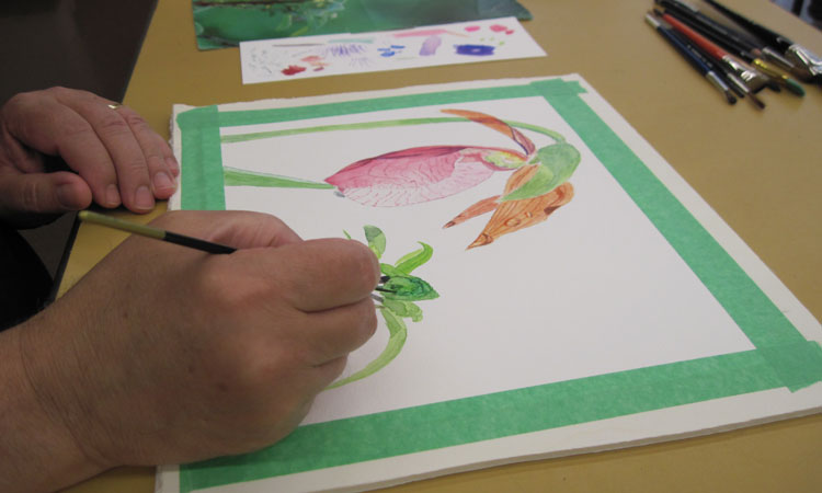 Botanical Art Fall Session