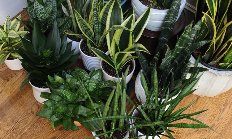 Pre-lecture Plant Swap
