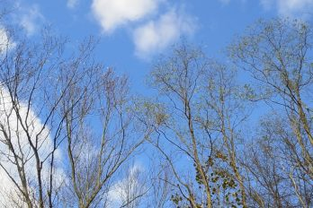 Bare tree branches against a blue sky