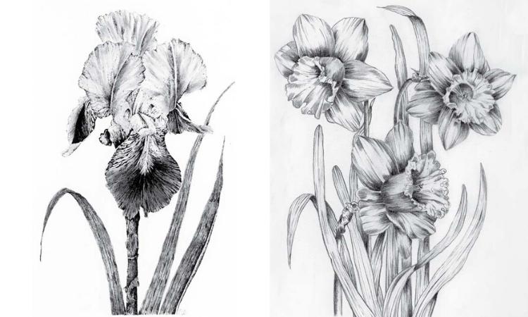 (POSTPONED) Fundamentals of Botanical Drawing