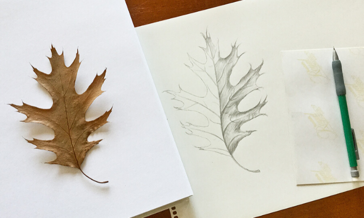 Intro to Nature Drawing