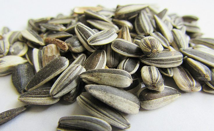 Close up of sunflower seeds in a small pile