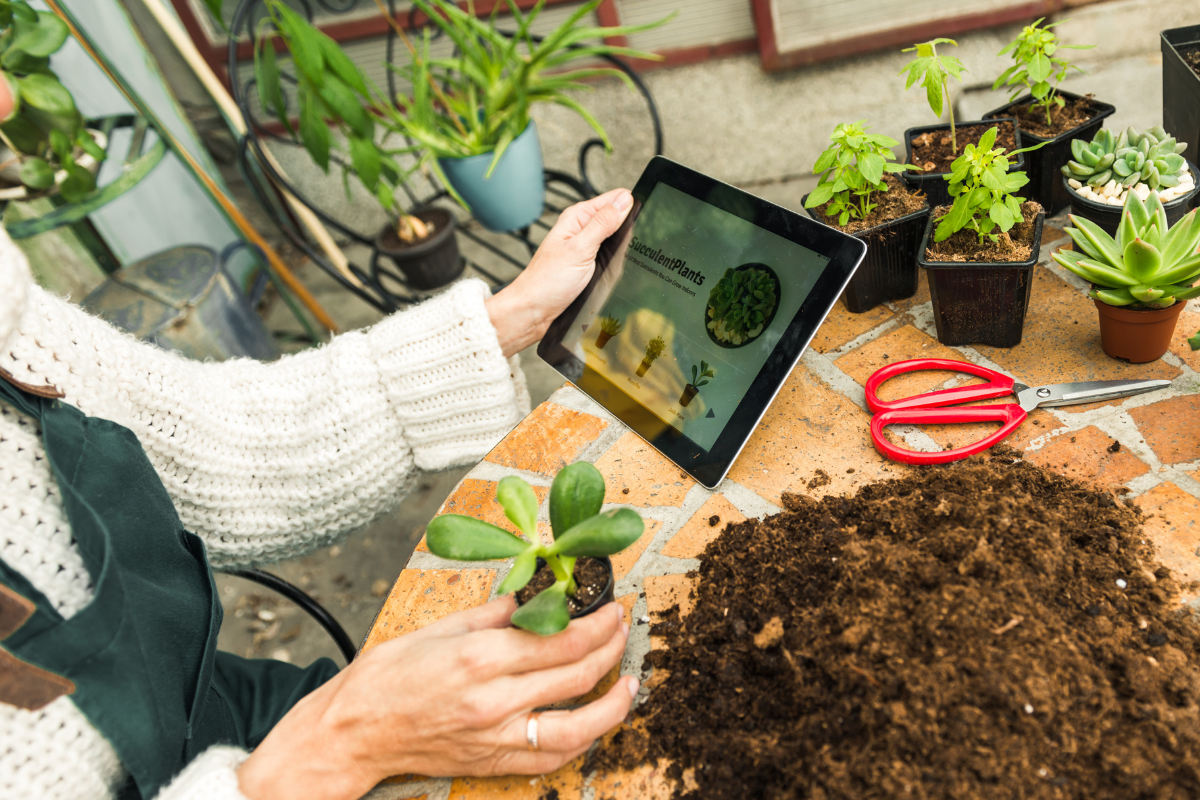 Online Learning Ipad and plants